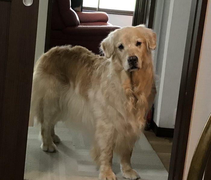 我が家の愛犬レイ